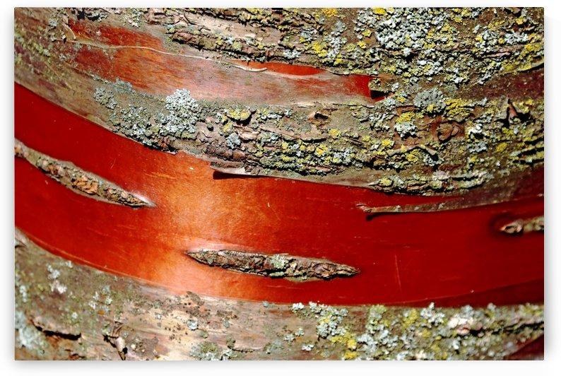 Manchurian Cherry Bark Abstract II by Deb Oppermann