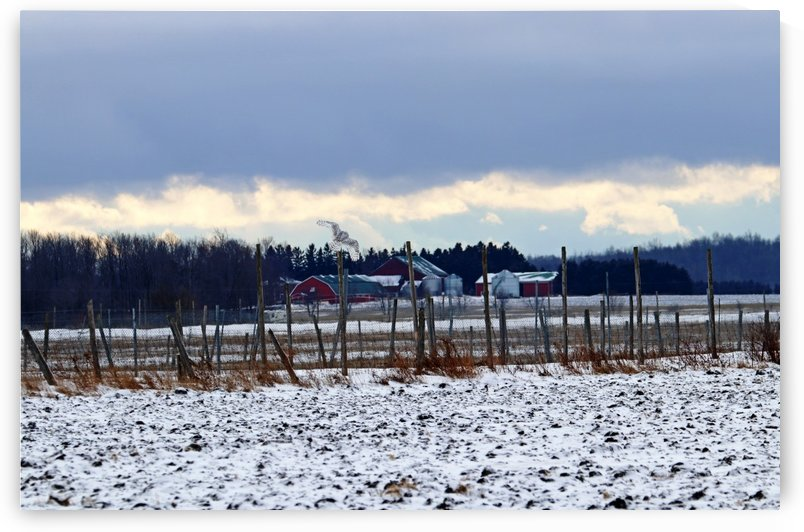 Winter Farm Scene With Snowy Owl by Deb Oppermann