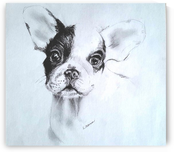 French Bulldog Puppy by Shadow and Form