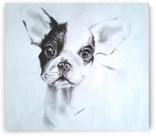 French Bulldog Puppy by Peter Horrocks