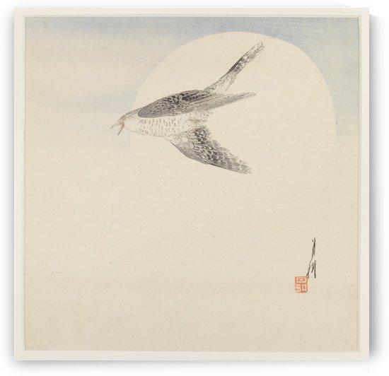 Night bird flying by Ogata Gekko