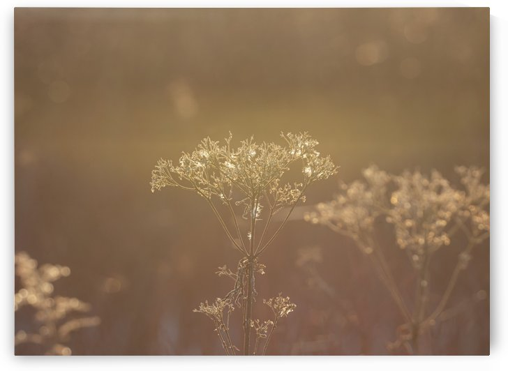 Morning Light by Chris Couling
