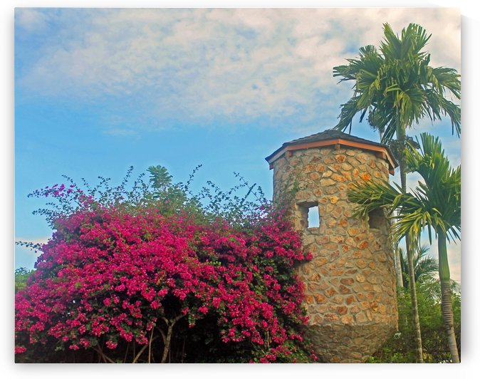 Pink and Palm Trees by Gods Eye Candy