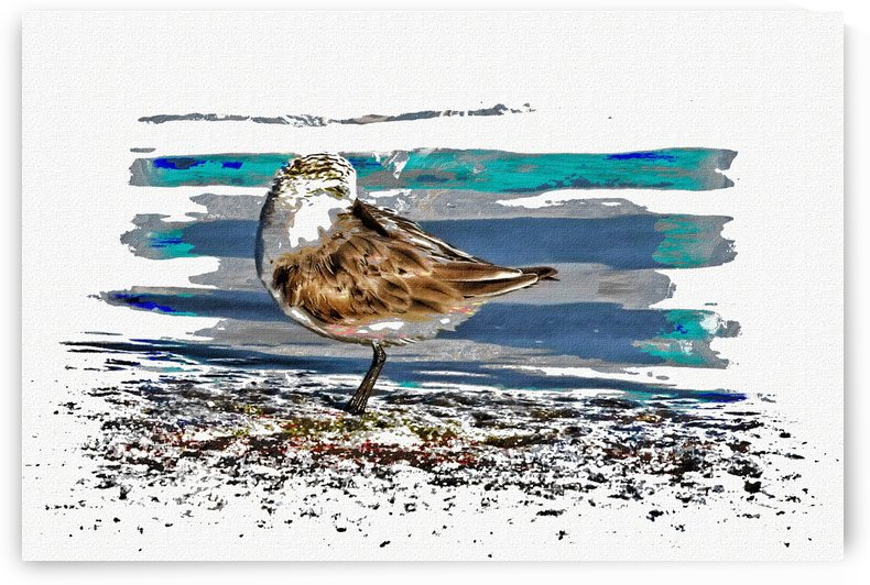 Sandpiper Shorebird by HH Photography of Florida