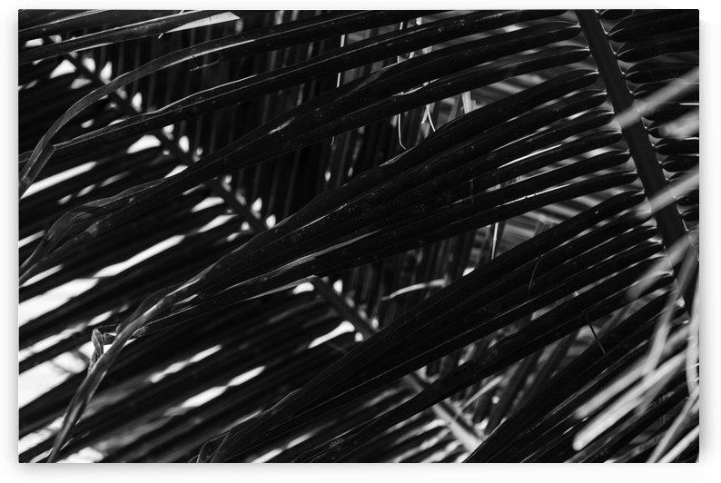Dark Lines by Ira Silence
