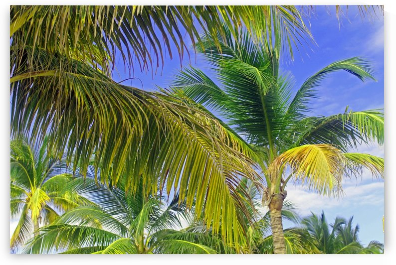 Surrounded by Palm Trees by Gods Eye Candy