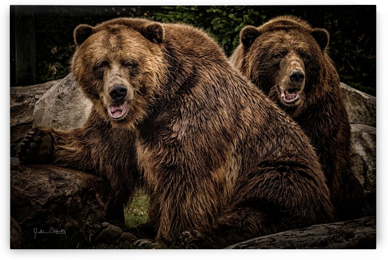 Brown Bear Brothers by Julian Starks Photography