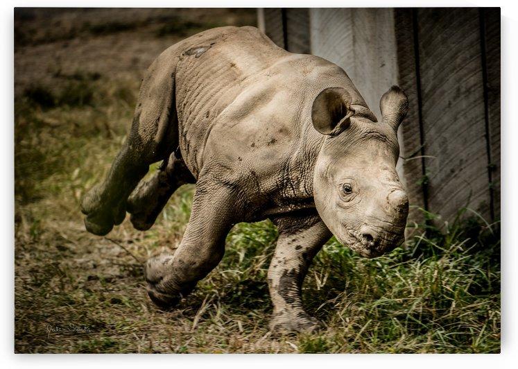 Baby Rhino by Julian Starks Photography