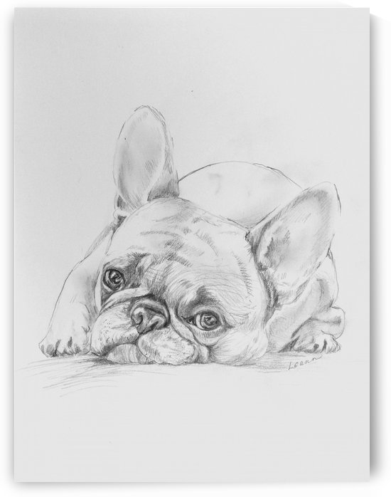 Sad Pug by Shadow and Form