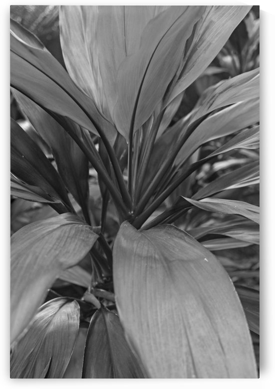 Bright Leaves B&W by Gods Eye Candy