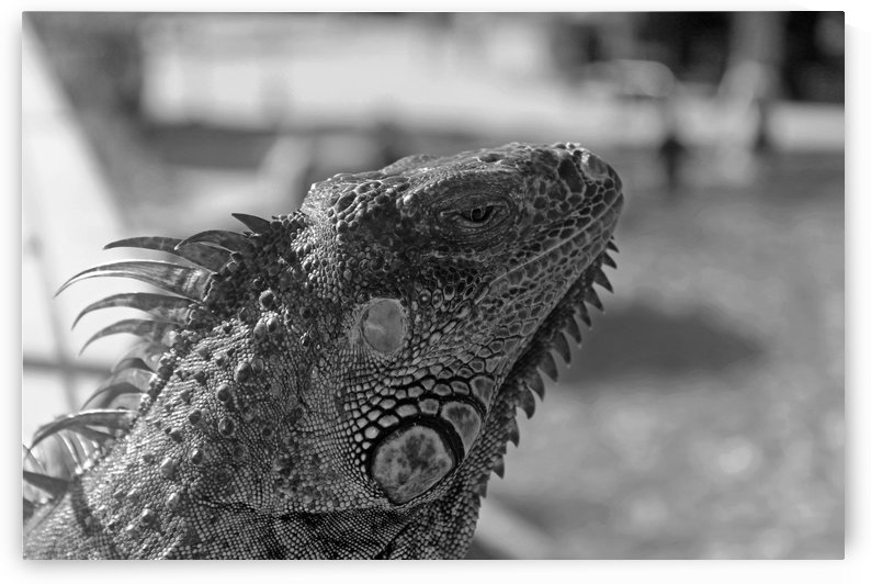 Looking into the Distance B&W by Gods Eye Candy