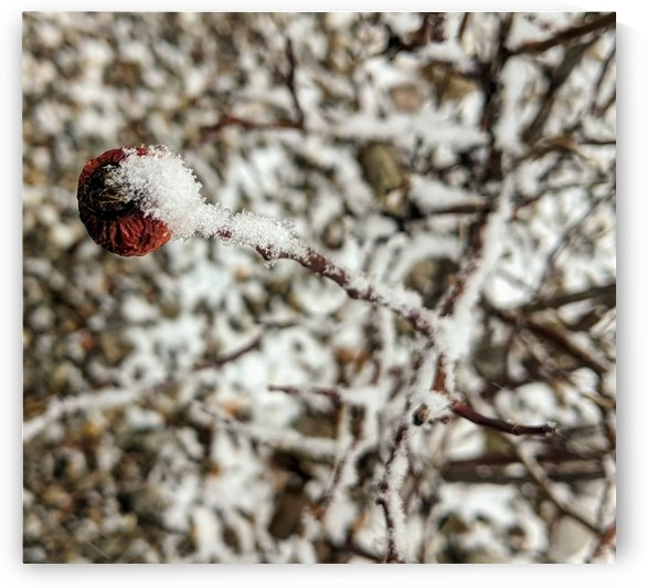 IMG_20200116_104755 by ELM