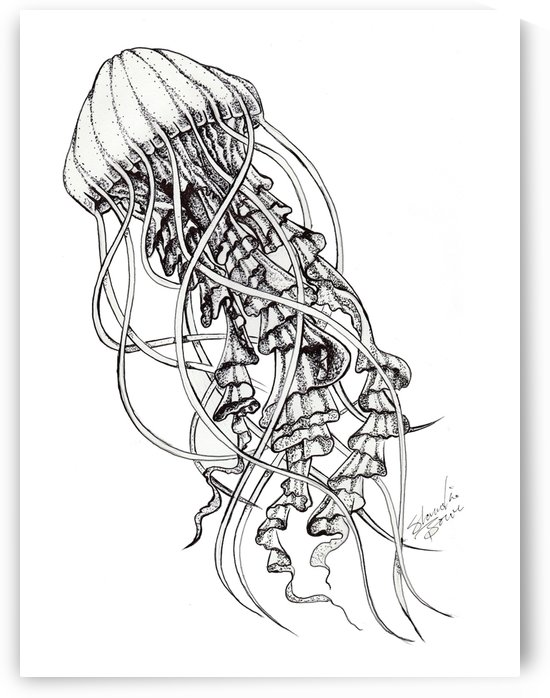 jellyfish by Shanrekia Bower
