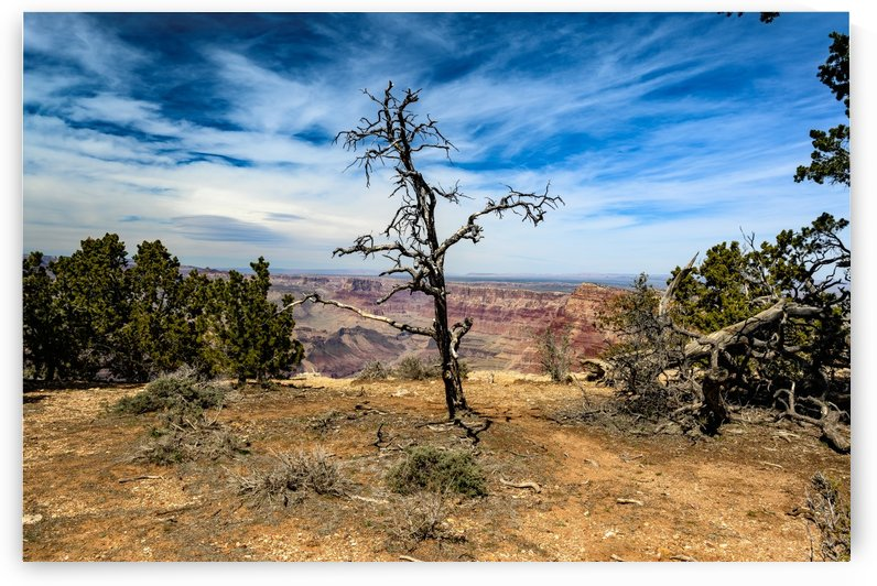 Wise  Grand Canyon by vincenzo