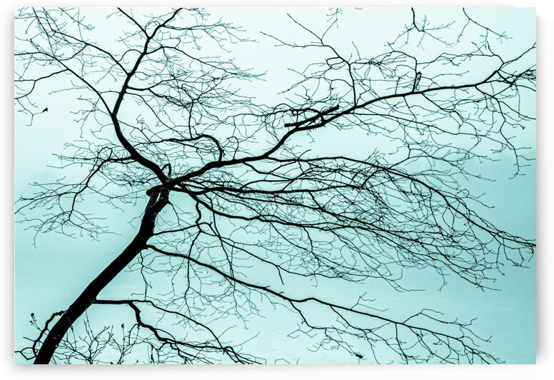 Branchlets by Dave Therrien