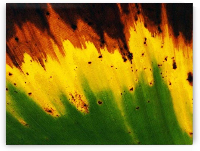 Leaf of Banana#1 by Rizal Ghazali