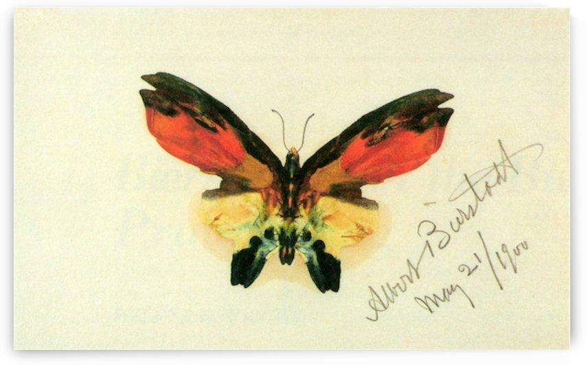 Butterfly 2 by Bierstadt by Bierstadt