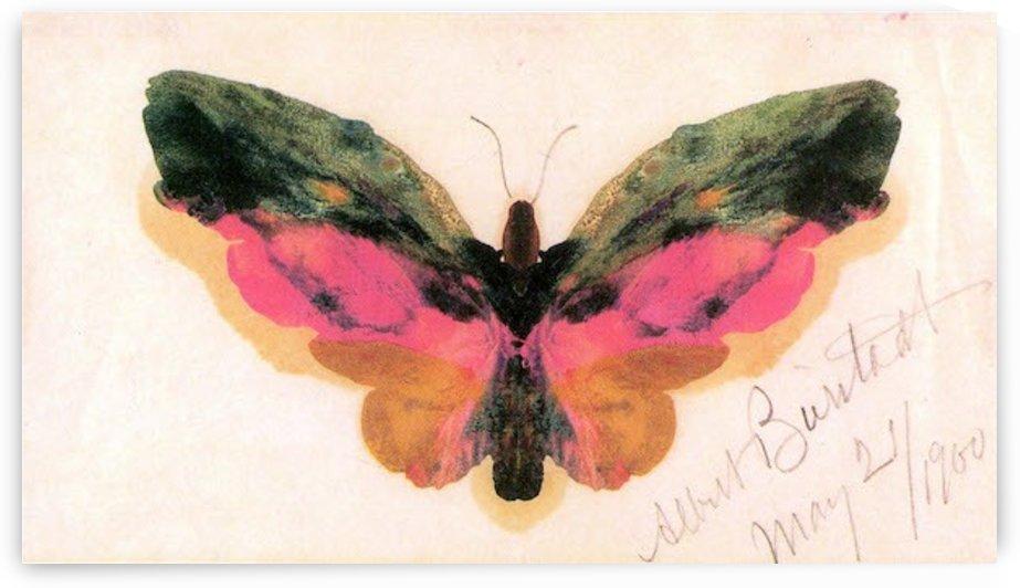 Butterfly by Bierstadt by Bierstadt