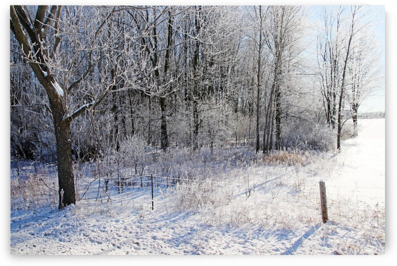 Frosty Winter Countryside by Deb Oppermann