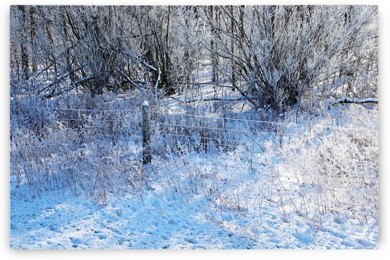 Winter Frost by Deb Oppermann