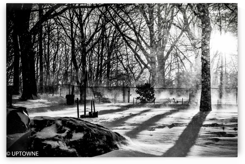 Snow at the Park  by vincenzo