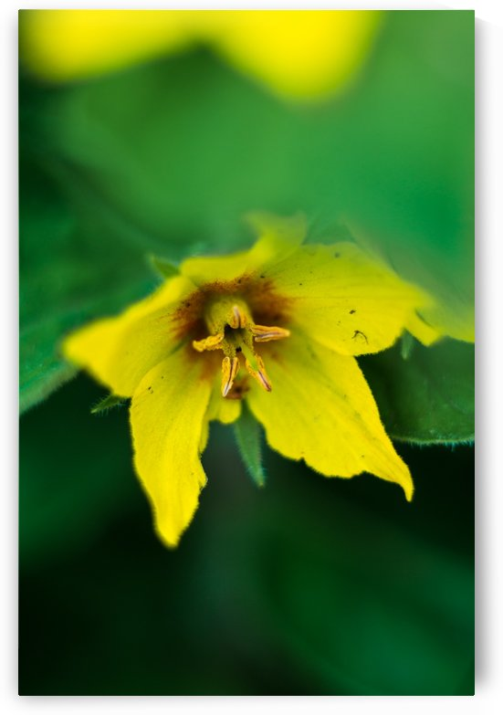 Yellows and Greens by MirkwoodPhoto
