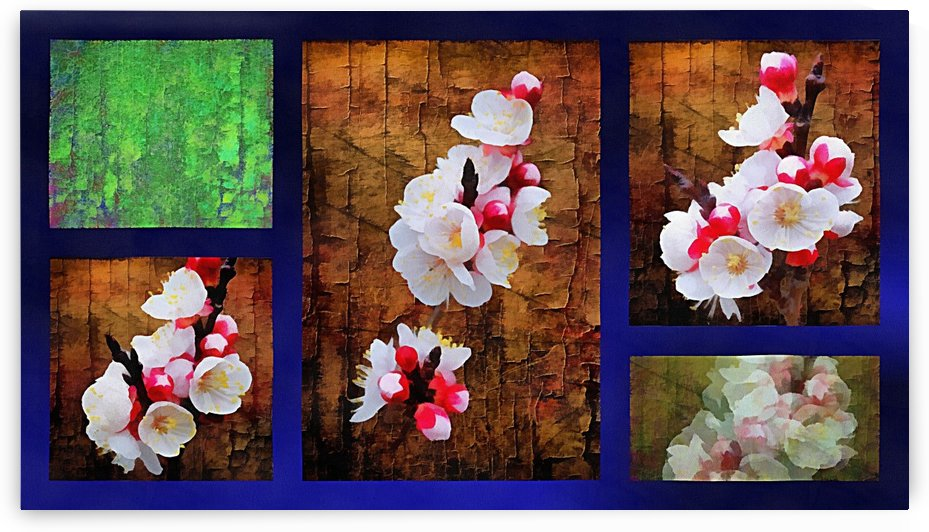 Apple Blossom Collage by Dorothy Berry-Lound