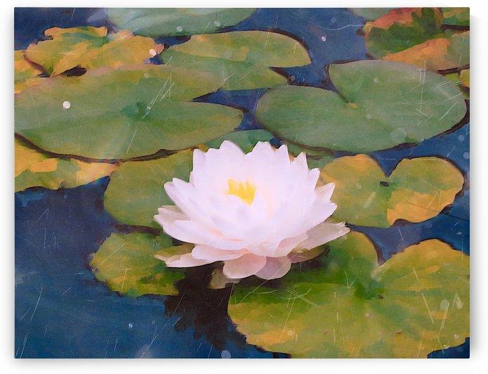 Lilly Pads Reflections by Jeremy Lyman