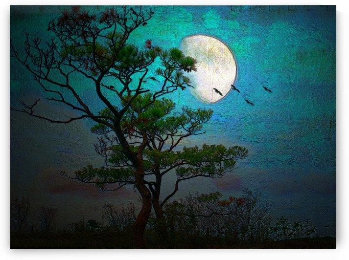 Moonlight regular size tiff by Susan Werby