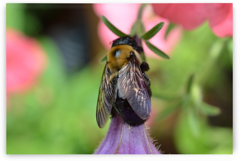 Bee Photograph by Katherine Lindsey Photography
