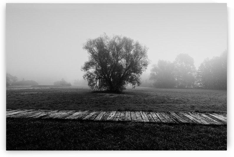 Loneliness by Boris Matonickin