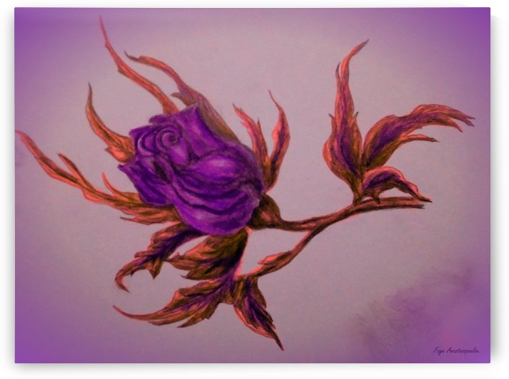 Decorative Wild Rose by Faye Anastasopoulou