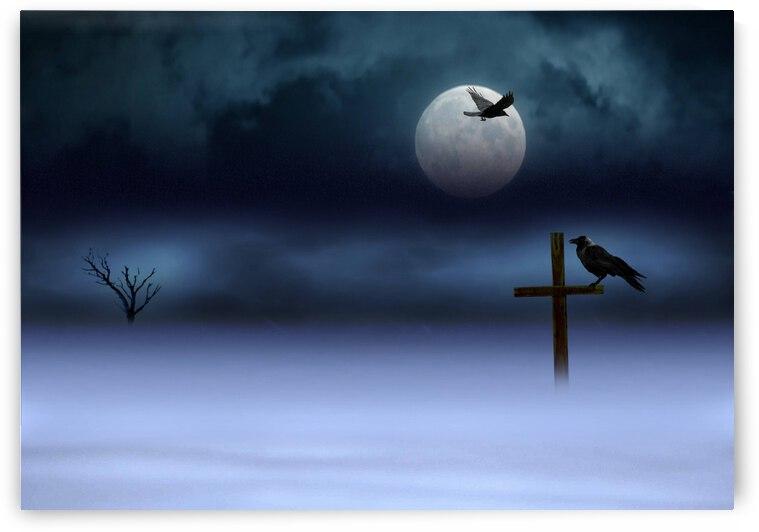 Night. Winter. Crow. by Radiy Bohem