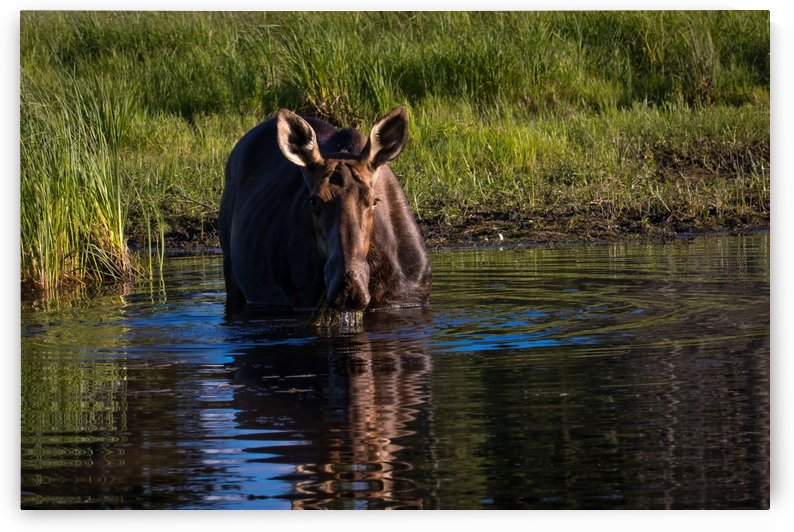 Canon EOS 7D Mark II_160821_ 246 by Kevin Smith-s WildWildWestPhotography