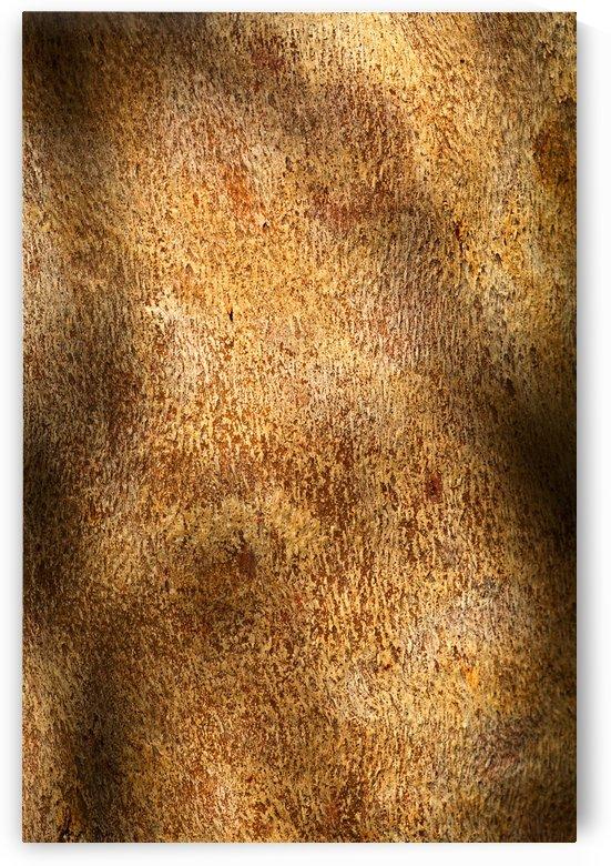 Eucalyptus Bark Golden Art by Joy Watson