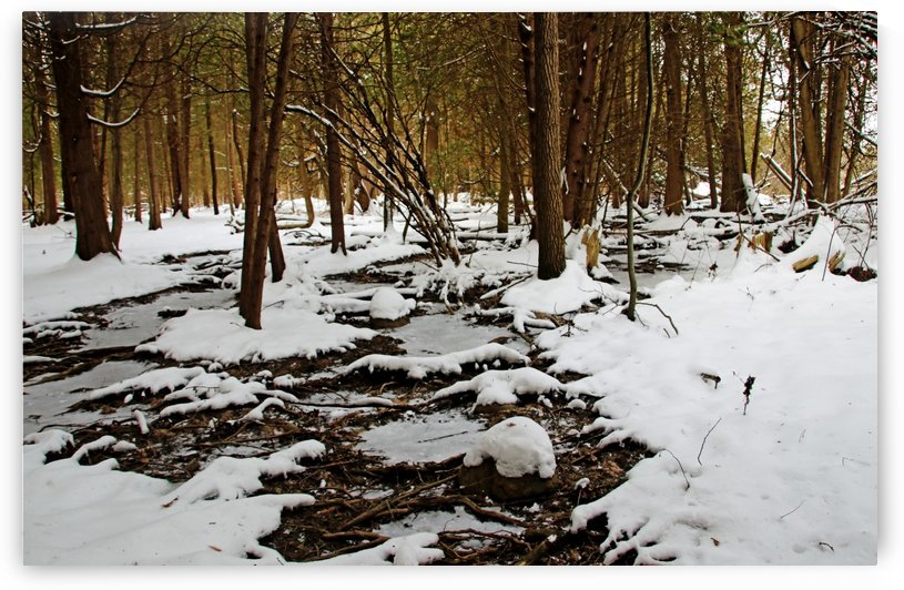 Winter Roots by Deb Oppermann
