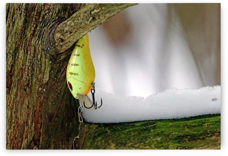 Shad Rap In A Tree by Deb Oppermann