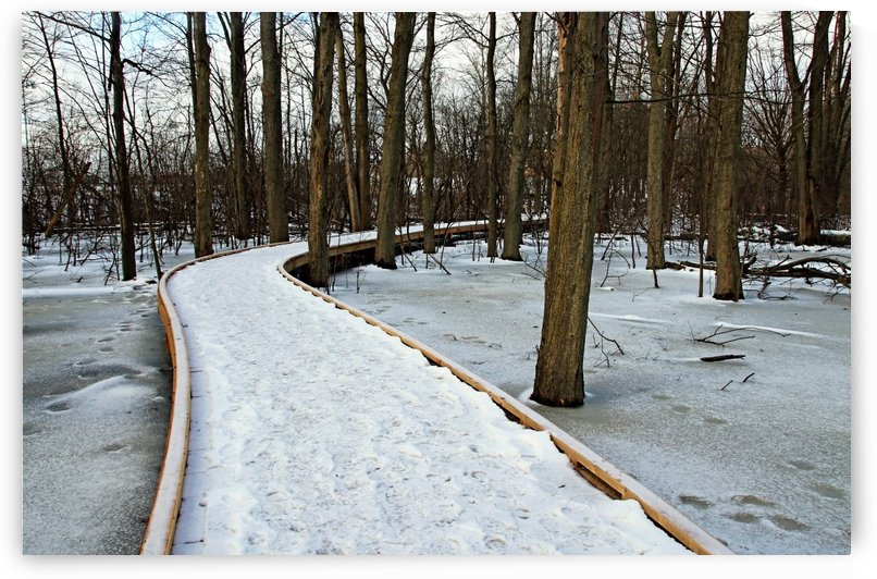 Wild Goose Woods Boardwalk Winter by Deb Oppermann