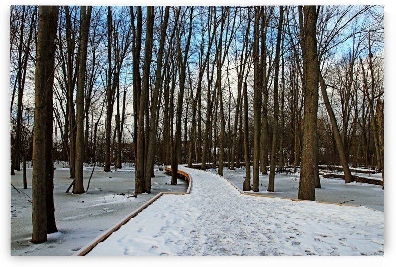 Wild Goose Woods Boardwalk Winter I by Deb Oppermann
