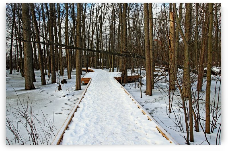 Wild Goose Woods Boardwalk Winter II by Deb Oppermann