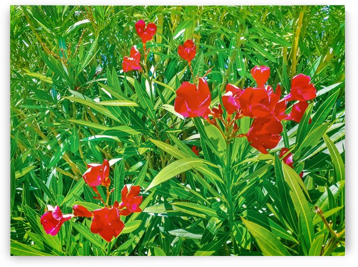 Red Flowers and Green Plants at Outdoor Garden by Daniel Ferreia Leites Ciccarino