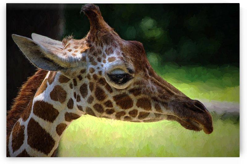 Giraffe  by Aurelia Schanzenbacher Sisters Fine Arts