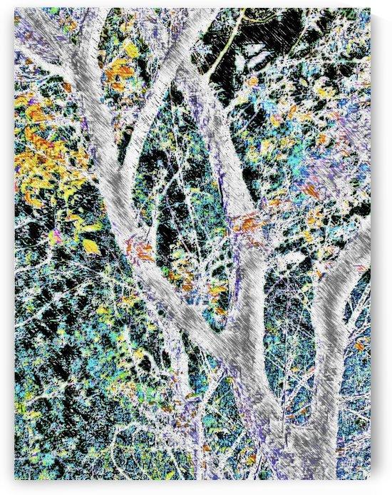 Tree Branch of Art 2 by Jeremy Lyman