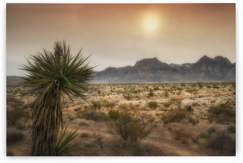 Yucca Plant at Sunset by Frank Wilson