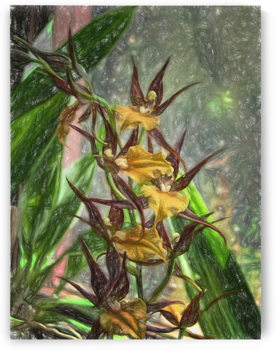 Hawaiian Orchids Color Pencil  by Aurelia Schanzenbacher Sisters Fine Arts