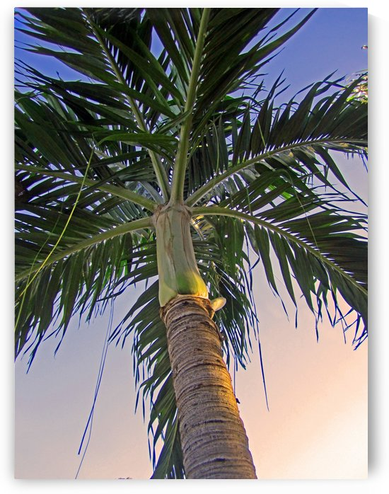 Sunset Palm Tree by Gods Eye Candy
