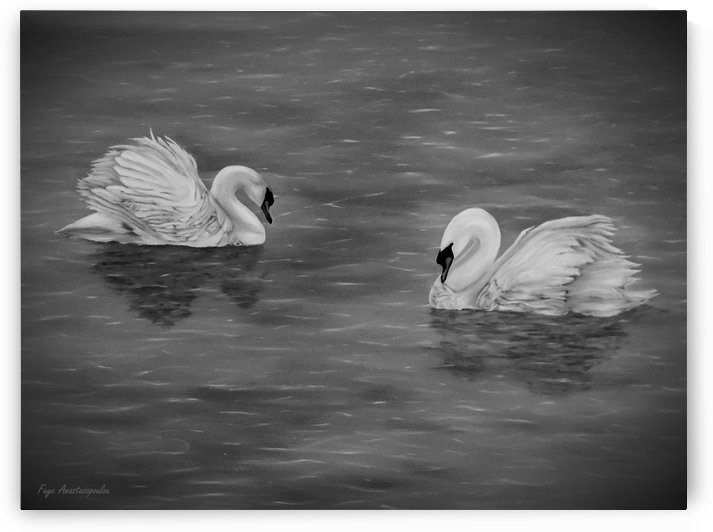 Swan Couple by Faye Anastasopoulou