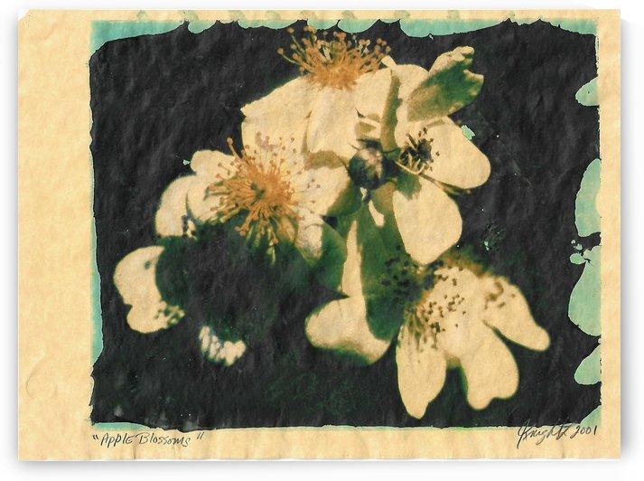 apple blossoms by Jon Knight Loruenser