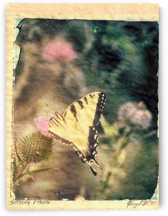 butterfly and thistle by Jon Knight Loruenser