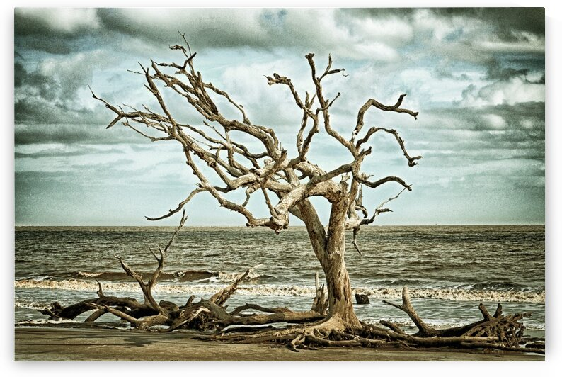 Driftwood Beach Lone Tree Blackgold by Bill Swartwout Photography